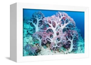 RF - Soft coral (Dendronephthya sp.) growing on sea bed. West Papua, Indonesia by Georgette Douwma