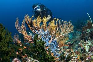 SCUBA Diving, Indonesia by Georgette Douwma