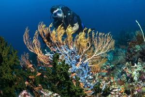 SCUBA Diving, Indonesia by Georgette Douwma