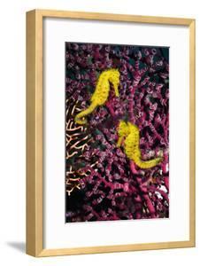 Sea Horses by Georgette Douwma