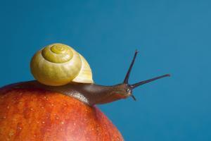 Snail by Georgette Douwma