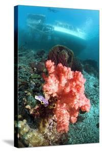 Soft Coral And Sea Squirts by Georgette Douwma