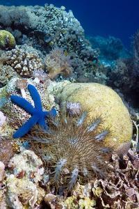 Starfish by Georgette Douwma