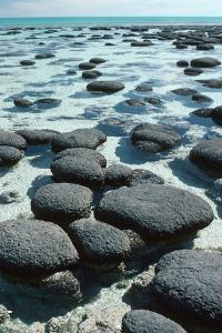 Stromatolites by Georgette Douwma