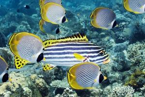 Tropical Reef Fish by Georgette Douwma