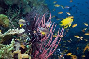 Tropical Reef by Georgette Douwma