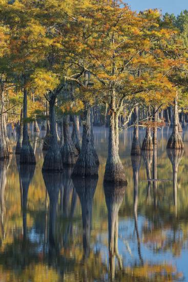 Georgia, George L. Smith State Park, Pond Cyprus in Early Morning Light-Judith Zimmerman-Photographic Print