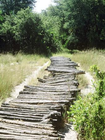 Corduroy Road Made of Cut Logs Lashed Together, Long Grass in Countryside