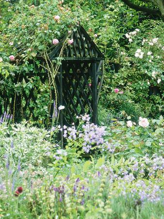 Rose Arbour in Cottage Garden, Climbing Rosa, Shrub Rosa, Buddleia & Lavandula (Lavender)