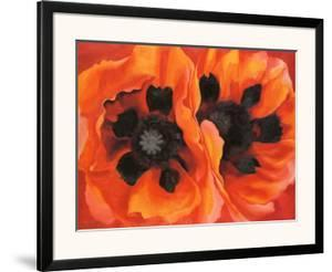 Beautiful Poppy Artwork For Sale Posters And Prints Art