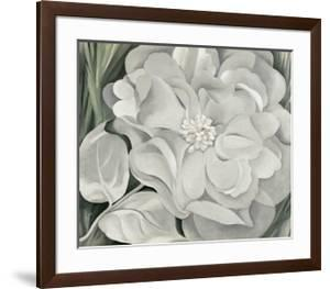 The White Calico Flower, c.1931 by Georgia O'Keeffe
