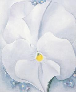 White Pansy, c.1927 by Georgia O'Keeffe