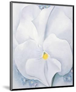 White Pansy, c.1927 by Georgia O'Keeffe