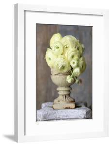 Bouquet of Yellow Ranunculus by Georgianna Lane