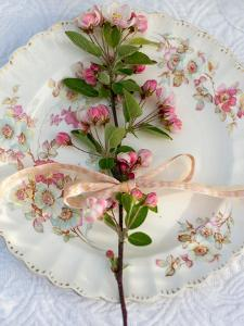 Branch of Apple Blossom on Vintage Plate by Georgianna Lane