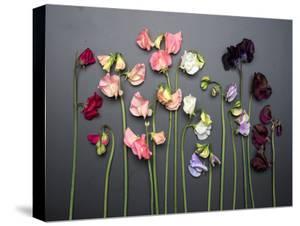 Cut Sweet Peas on Chalkboard by Georgianna Lane