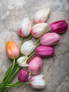 French Tulips on Stone Table by Georgianna Lane
