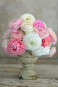 Pink and White Ranunculus in Floral Arrangement by Georgianna Lane