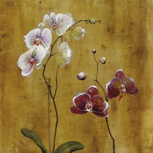 Orchid Bloom II by Georgie