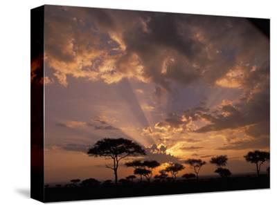 Crepuscular Sun Rays and Acacia Trees at Twilight, Masai Mara Game Reserve, Kenya, Africa