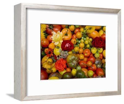 The Tomato Festival in Santa Rosa, California, Local Fruit and Vegtables