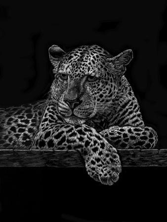 Jaguar by Geraldine Aikman