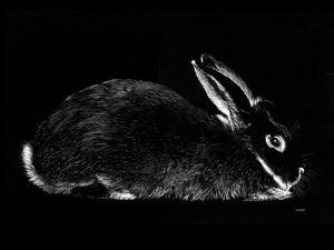 Rabbit by Geraldine Aikman