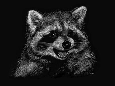 Racoon by Geraldine Aikman