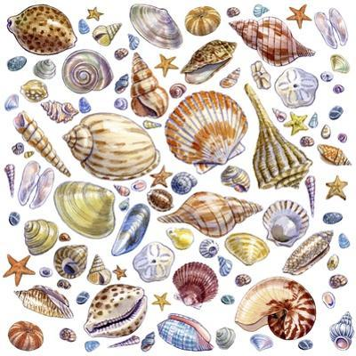 Seashells Array by Geraldine Aikman