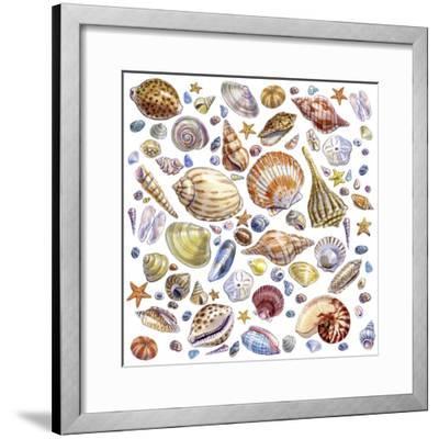 Seashells Array by Geraldine Aikman