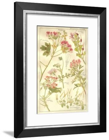 Geraniaceae Plate 323-Porter Design-Framed Premium Giclee Print