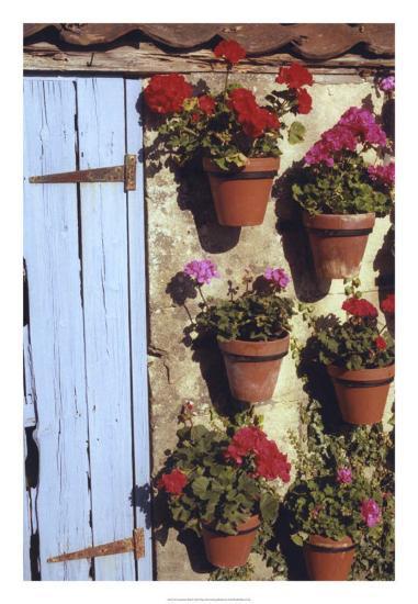 Geranium Wall-Meg Mccomb-Giclee Print