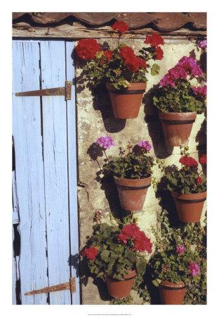 https://imgc.artprintimages.com/img/print/geranium-wall_u-l-f3r51s0.jpg?p=0