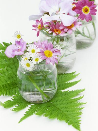 Geraniums and Chrysanthemums in Jars with Fern-Linda Burgess-Photographic Print