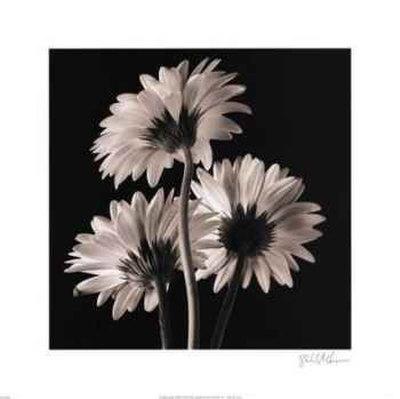 https://imgc.artprintimages.com/img/print/gerber-daisies-ii_u-l-eqwb30.jpg?p=0