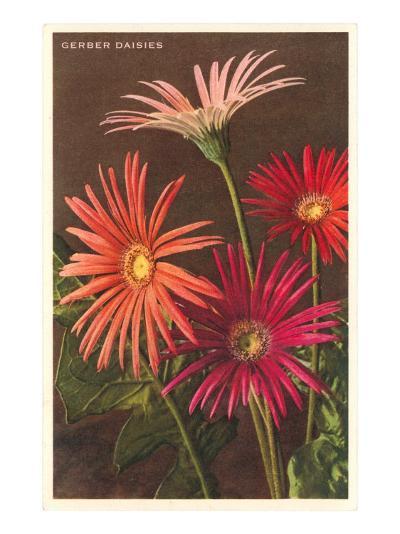 Gerber Daisies--Art Print