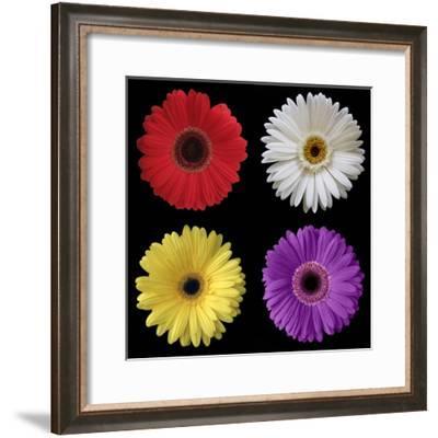 Gerber Group 2-Jim Christensen-Framed Photographic Print