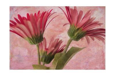 Gerber Trio-Bob Rouse-Giclee Print