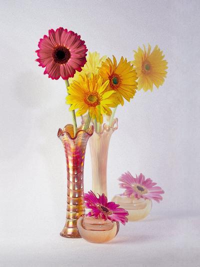Gerbera Daisies in Antique Vase-Diane Miller-Photographic Print