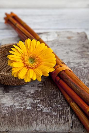 Gerbera, Flower, Still Life, Orange-Andrea Haase-Photographic Print