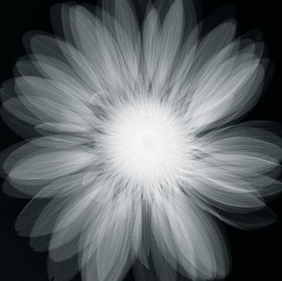 Gerbera Glow-Hugh Turvey-Giclee Print