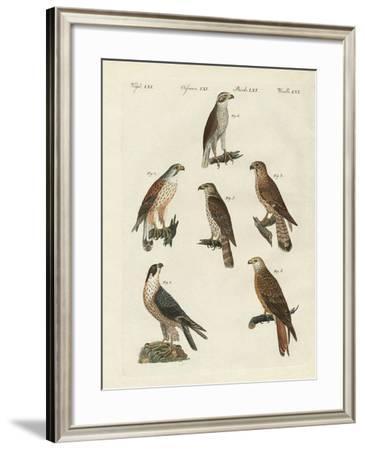German Birds of Prey--Framed Giclee Print
