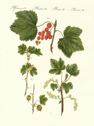 German Kind of Fruits--Giclee Print