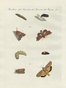 German Moths