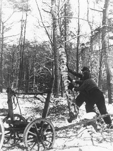 A Couple Cutting Down a Tree for Firewood, 21st February 1947 by German photographer