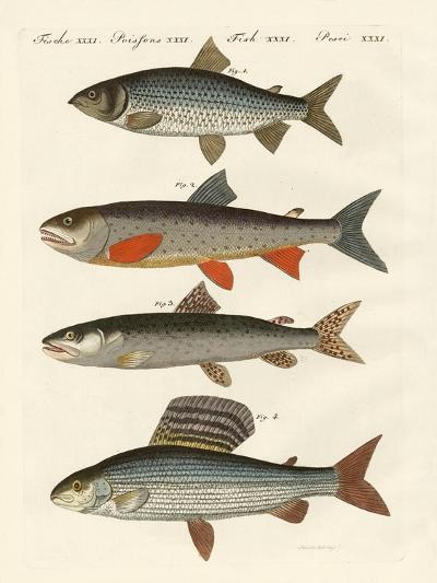 German River Fish--Giclee Print