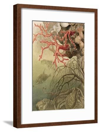 """Red Coral, Plate from """"Brehms Tierleben: Allgemeine Kunde Des Tierreichs"""", Vol.10, P.608,…"""