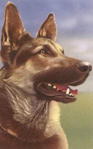 German Shepherd Head
