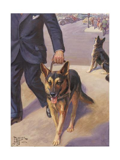German Shepherd Works as a Seeing Eye Dog, Leading a Blind Man--Photographic Print
