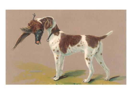 german short haired pointer with pheasant art print by. Black Bedroom Furniture Sets. Home Design Ideas